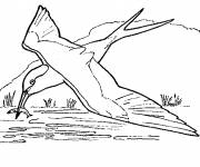 Coloring pages Fisher swallow