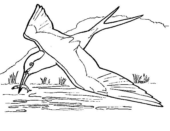 Free coloring and drawings Fisher swallow Coloring page
