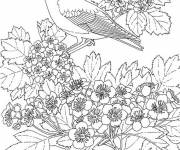Coloring pages Garden swallow