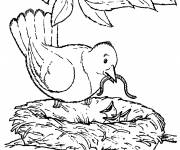 Free coloring and drawings Mother Swallow and her cubs Coloring page