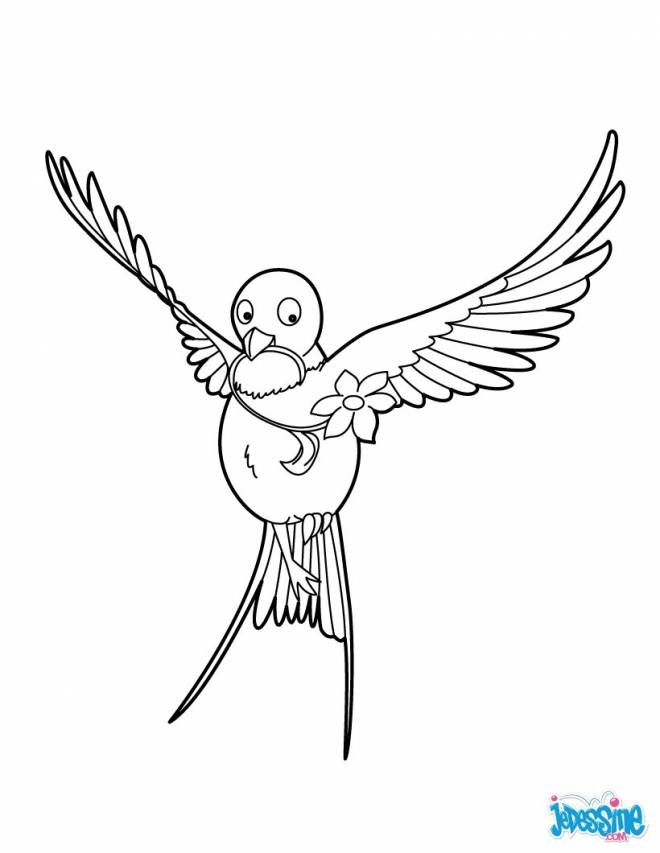 Free coloring and drawings Swallow carrying a flower Coloring page
