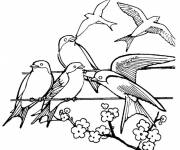 Coloring pages Swallow on a wire