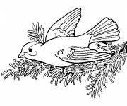 Free coloring and drawings Swallow on tree Coloring page