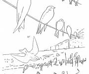 Coloring pages Swallows rest