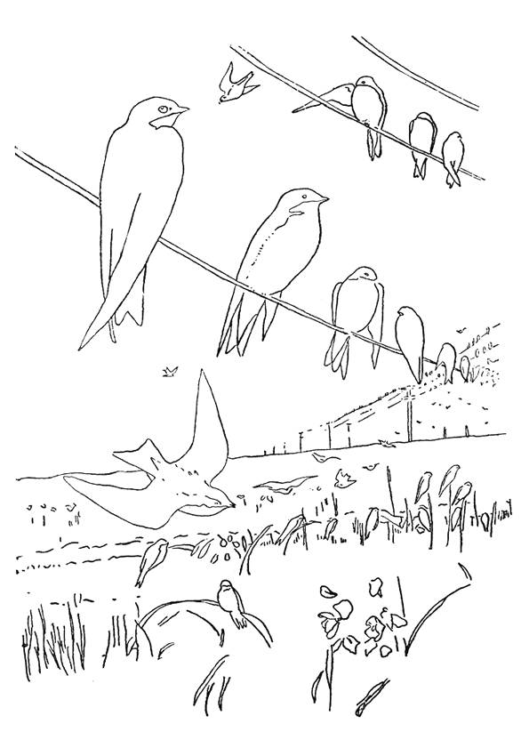 Free coloring and drawings Swallows rest Coloring page