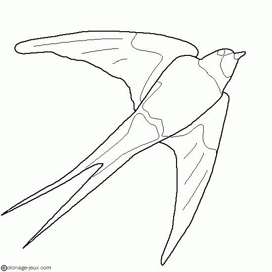 Free coloring and drawings Vector swallow Coloring page