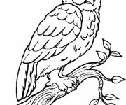 Free coloring and drawings Owl Forest in black Coloring page