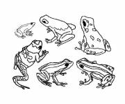 Free coloring and drawings The Forest Frog Coloring page