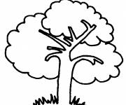 Free coloring and drawings Adult Tree Coloring page
