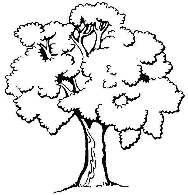 Free coloring and drawings Black and white trees Coloring page