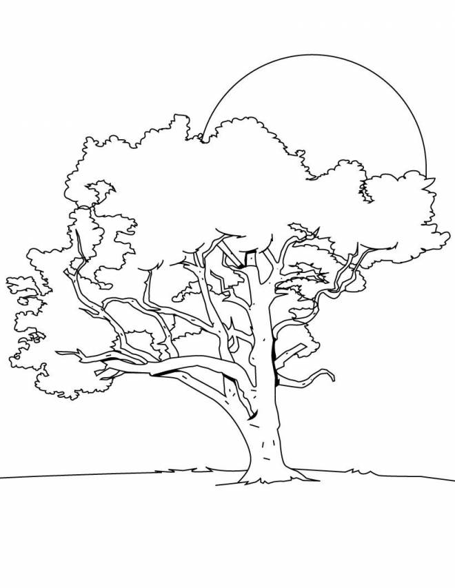 Free coloring and drawings Color tree Coloring page