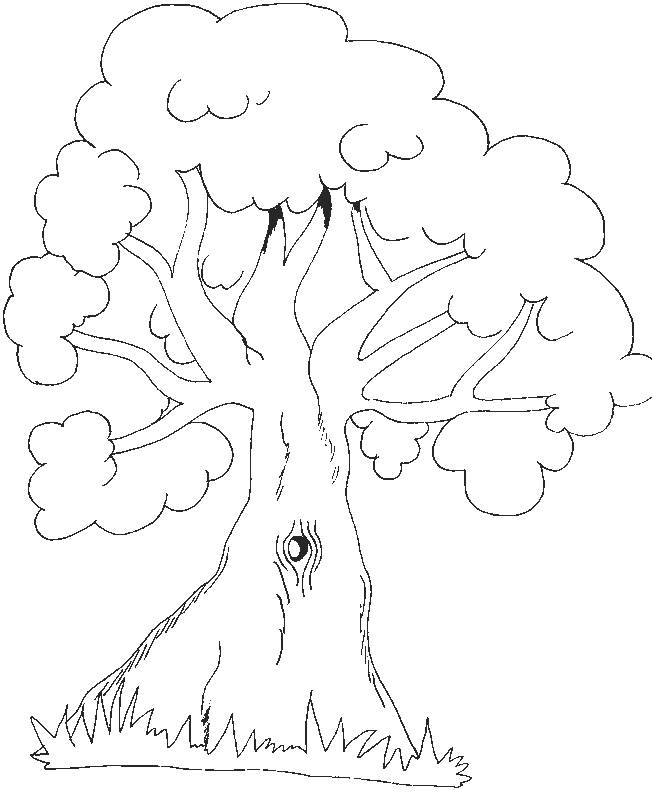 Free coloring and drawings Covered tree Coloring page