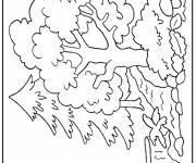 Coloring pages Different trees