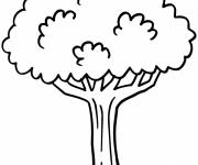 Free coloring and drawings Easy to color tree Coloring page