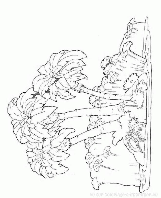 Free coloring and drawings Island Trees Coloring page