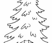 Coloring pages Pine tree