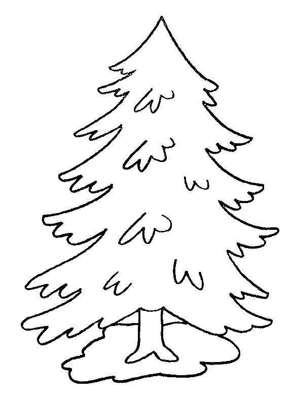 Free coloring and drawings Pine tree Coloring page