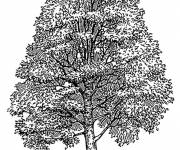 Coloring pages Realistic tree