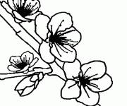 Coloring pages The Tree Flowers