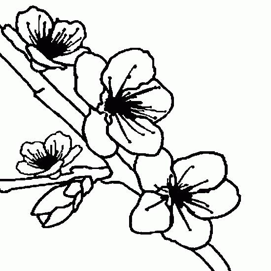Free coloring and drawings The Tree Flowers Coloring page