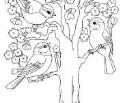 Coloring pages Tree and Birds