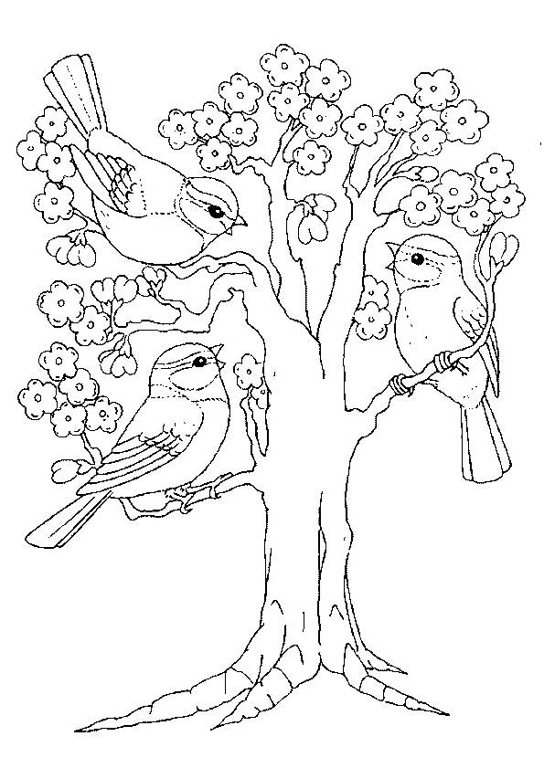 Free coloring and drawings Tree and Birds Coloring page