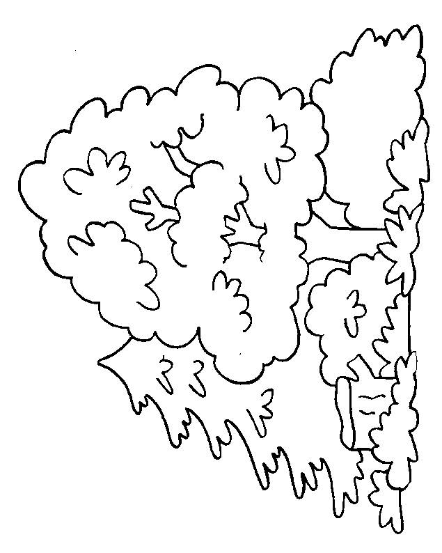 Free coloring and drawings Tree in the forest Coloring page