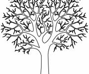 Free coloring and drawings Tree without Leaves Coloring page