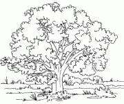 Coloring pages Trees and Nature