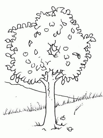 Free coloring and drawings Trees and Plain Coloring page