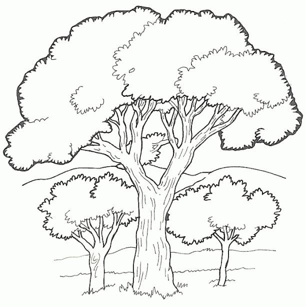 Free coloring and drawings Vector trees Coloring page