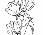 Coloring pages A magnificent tulip that opens
