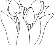 Coloring pages Beautiful tulips