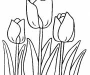 Coloring pages Beautiful tulips online