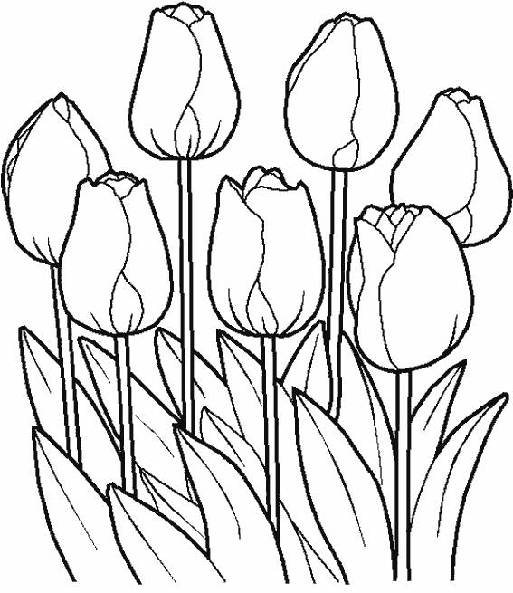 Free coloring and drawings Closed Tulip Petals Coloring page