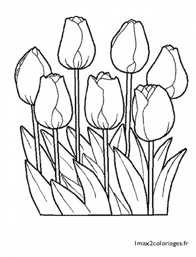 Free coloring and drawings Closed Tulips Coloring page