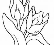 Coloring pages Color Tulip Flowers
