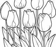 Coloring pages Pretty vector tulips