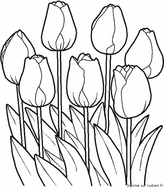 Free coloring and drawings Pretty vector tulips Coloring page