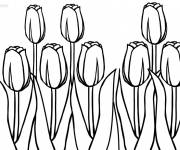 Coloring pages Superb tulips