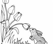 Coloring pages The Rabbit and Tulip Flowers