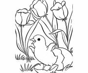 Coloring pages The Tulip and The Chick