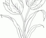 Coloring pages Tulip Flower Decoration