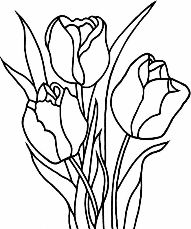 Free coloring and drawings Tulip flowers for decoration Coloring page