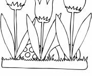 Coloring pages Tulip Flowers Illustration