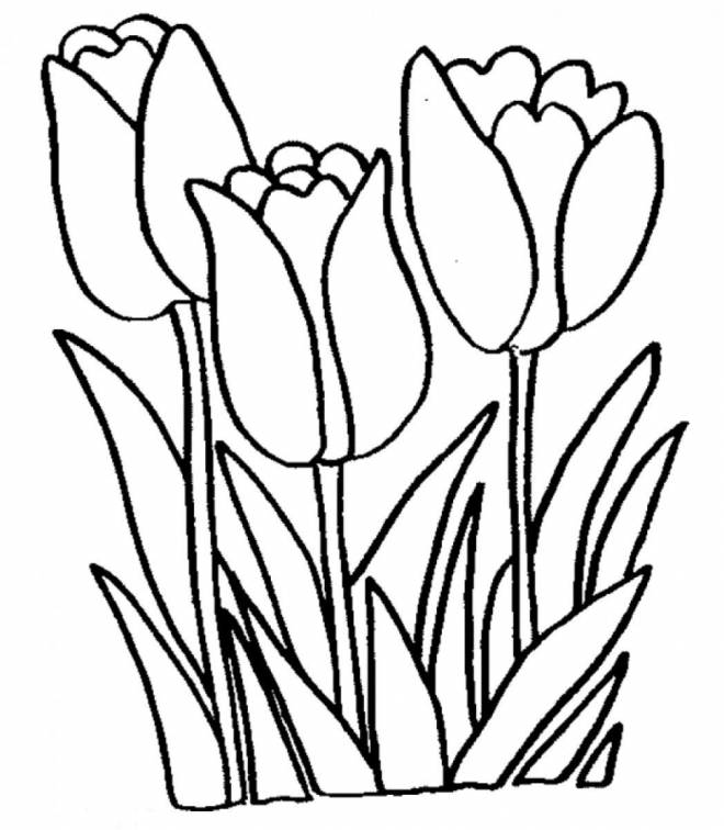 Free coloring and drawings Tulip online Coloring page