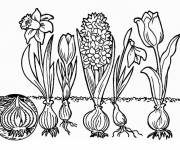 Coloring pages Tulips and Flowers