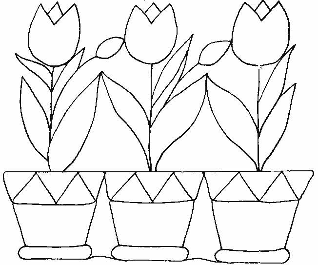 Free coloring and drawings Tulips and Pots Coloring page