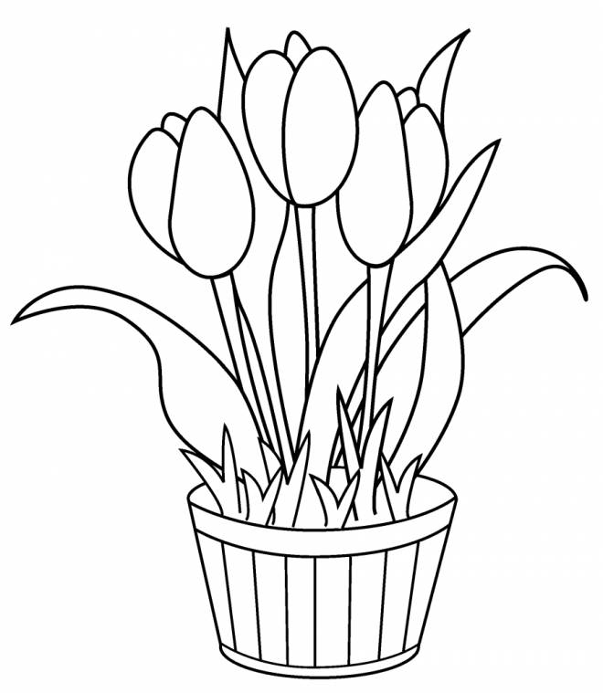 Free coloring and drawings Tulips to decorate Coloring page