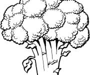 Coloring pages Broccoli vegetable